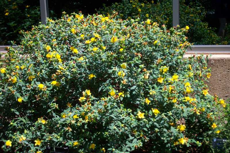 Missouri Botanical Garden Map Flowers Gallery