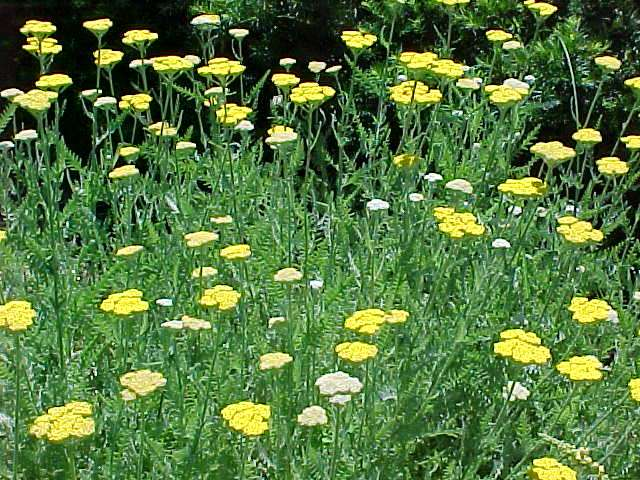 Perennials For Season Long Bloom