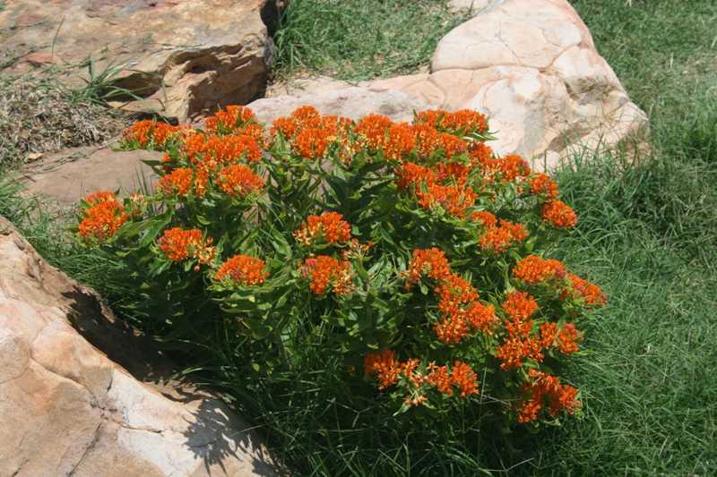 Цветы на даче описание и