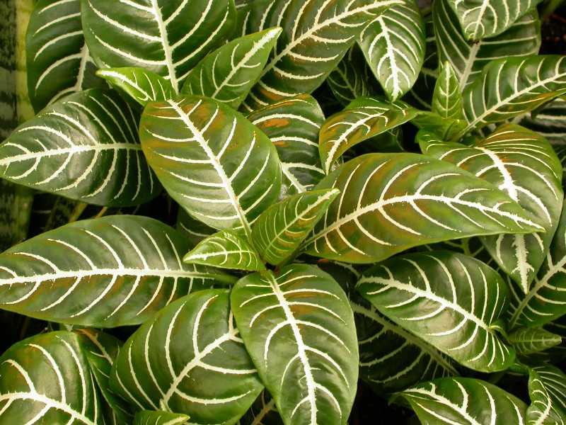 Top 10 houseplants - Best house plants ...