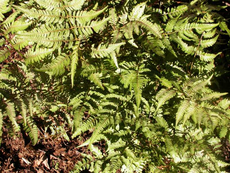 Low maintenance perennials for Low maintenance plants