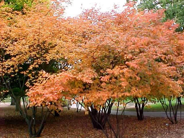 Larger trees and shrubs - Planting fruit trees in autumn ...