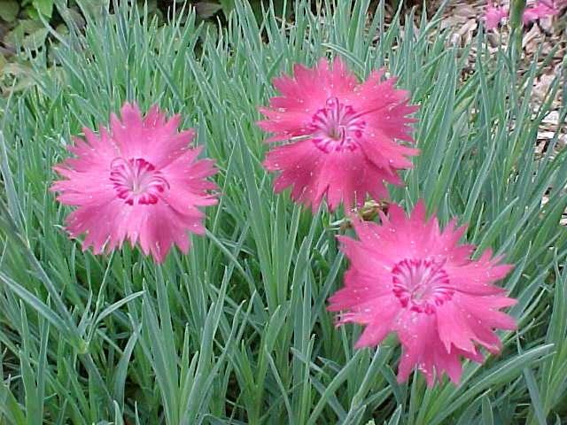 http://www.missouribotanicalgarden.org/Portals/0/PlantFinder/low/Y210-0901020.jpg