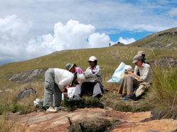 Garden researchers conduct field work in Madagascar