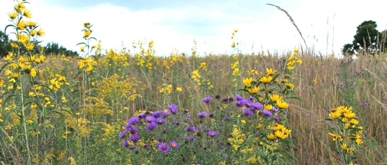 September prairie