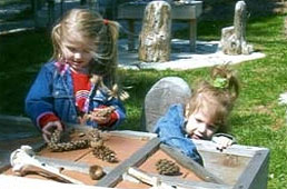 Kids design with pine cones
