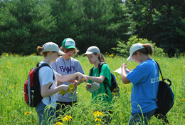 Students surveying prairie flora