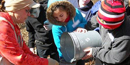 Students pouring maple sap from bucket