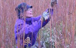 Volunteer collecting seed at the Reserve
