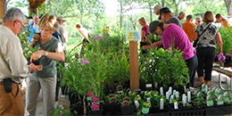 Vendors and buyers at the fall wildflower sale