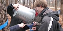 Students collecting syrup