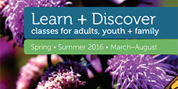 Learn and Discover, Spring-Summer 2016