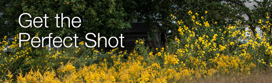 Get the Perfect Shot