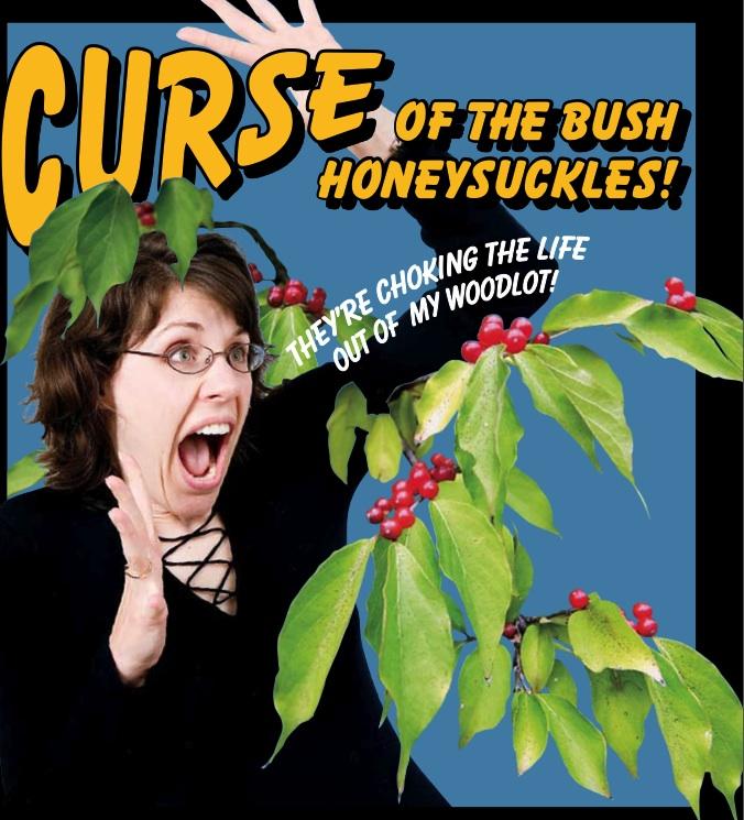 Curse Of The Bush Honeysuckle