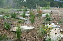 Rain garden and bioswale