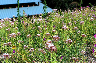 Plants on a green roof