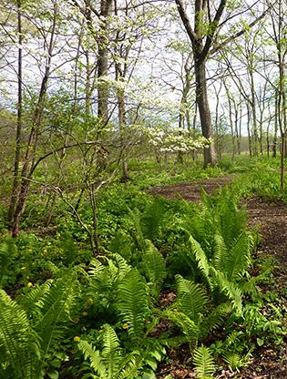 Woodland restoration
