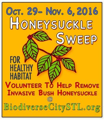 Honeysuckle sweep flyer