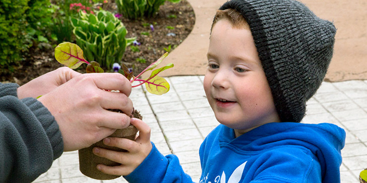 Boy receiving seedling