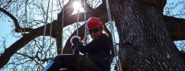 Woman climbing tree at Canopy Climb