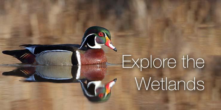 Explore the Wetlands