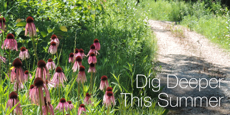 Dig deeper this summer