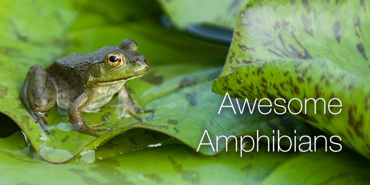 Awesome Amphibians