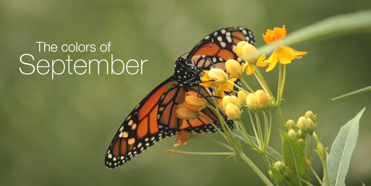The colors of September