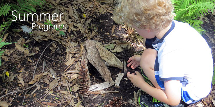 Summer Programs--child exploring forest floor