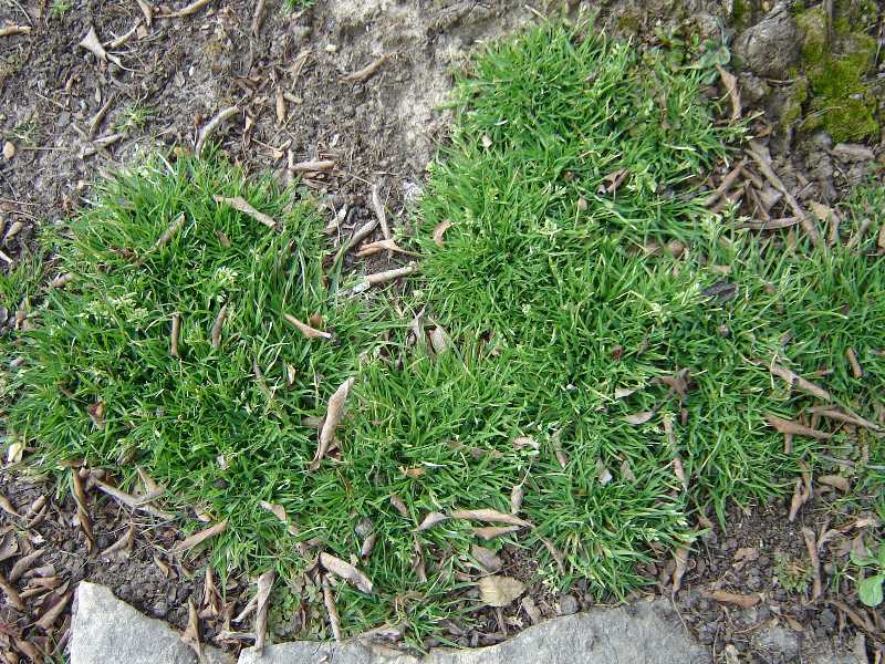 Weeds: What's in Your Lawn?
