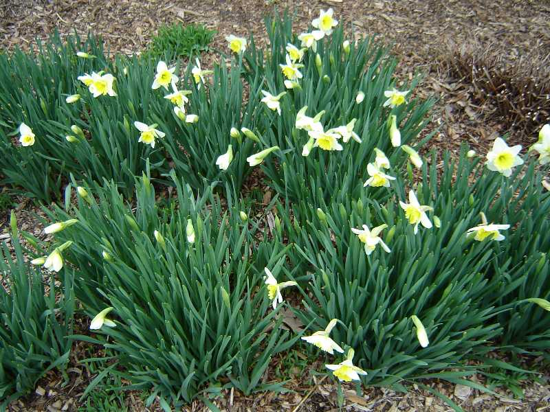Spring Bulbs are Popping all Over!