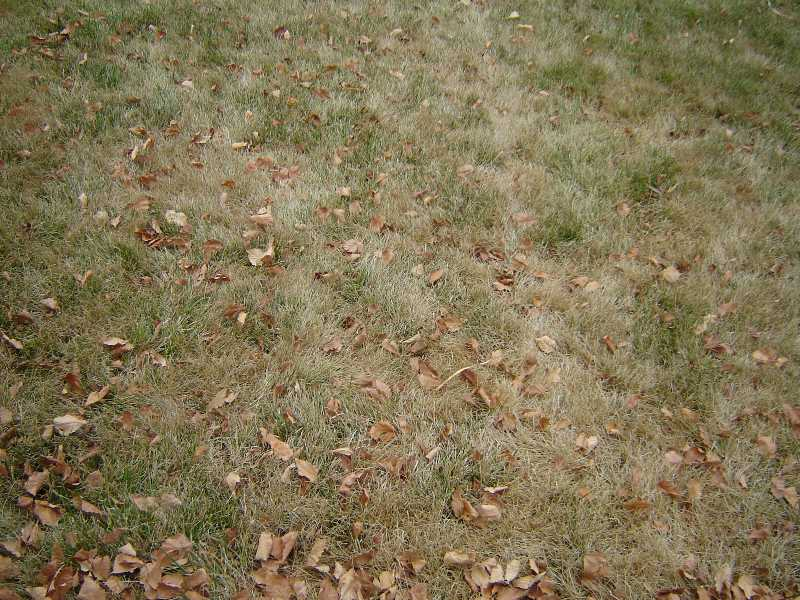 Now's the Time to start Your Cool-season Lawn Maintenance