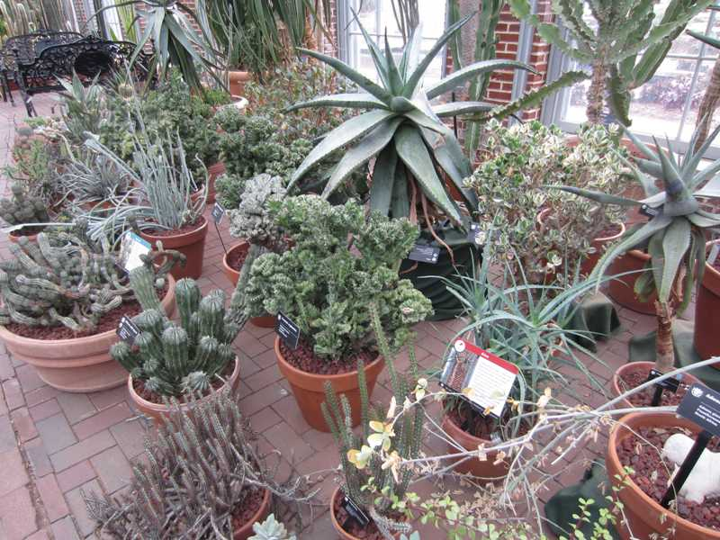 Cacti and Succulents on Display