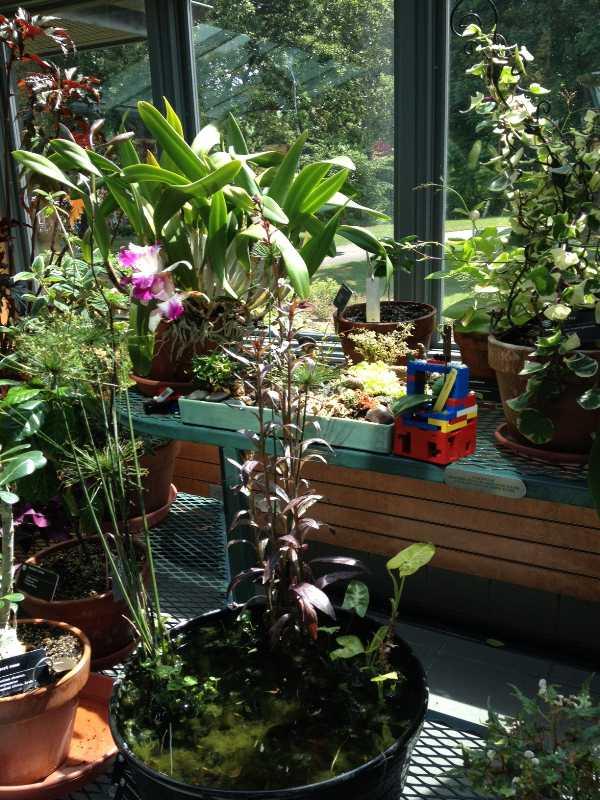 Summer home gardening blog for Indoor gardening expo 2014