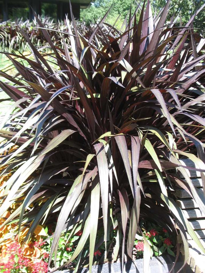The Joy of Ornamental Grasses