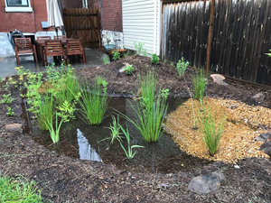 The Project Clear Rainscaping Small Grants Program is Back!