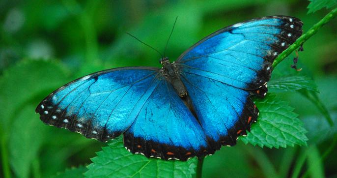 Butterfly house Syracuse Italy