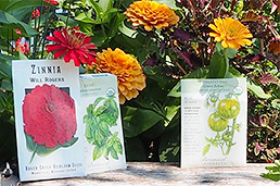 Seed packets and annuals