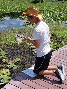 Participant studying pond critters