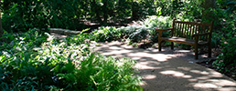 Bench in the Woodland Garden