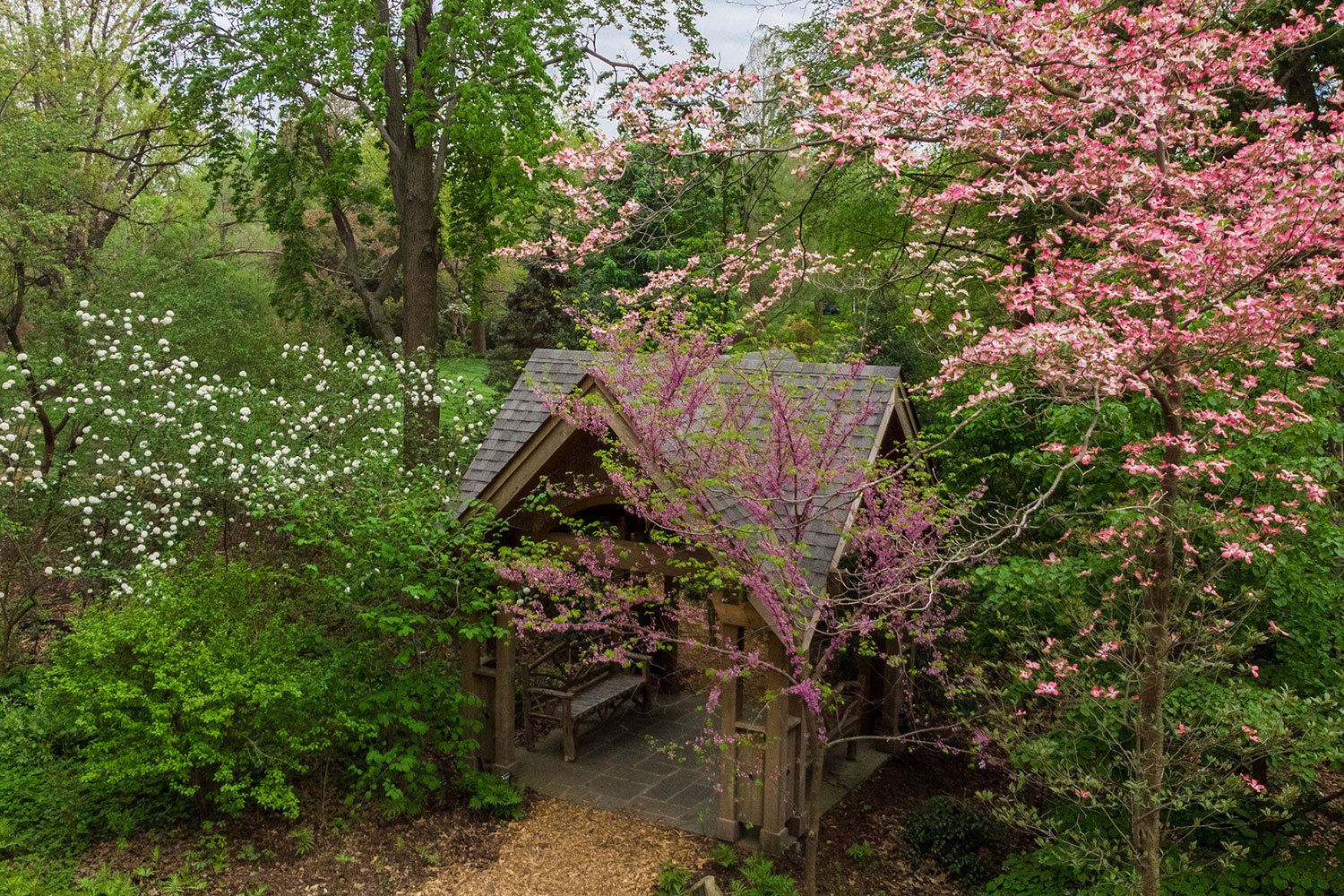 aerial view of English Woodland Garden gazebo surrounded by pink flowering dogwood blossoms