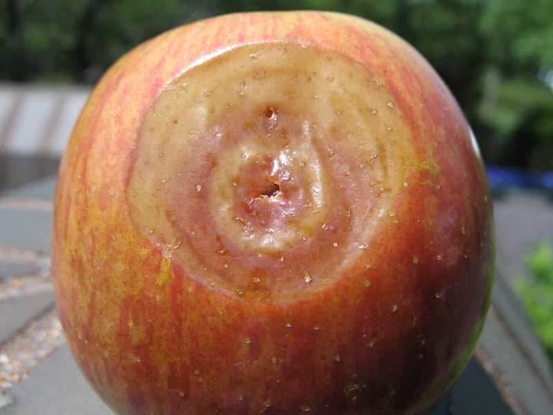 Fruit Spots And Rot