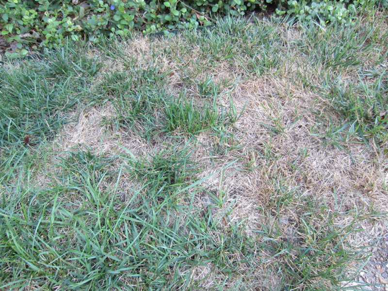 Image Result For Kill Weeds In Lawn
