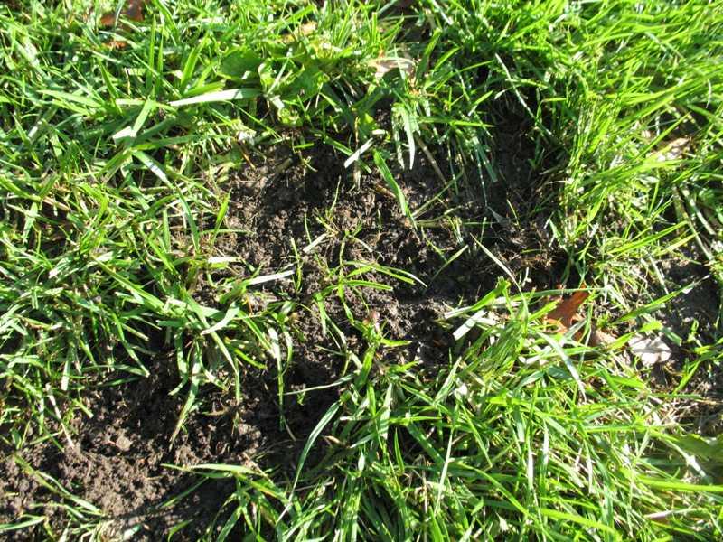 Lawn Problems: Cool-season Grasses