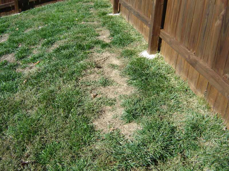 Lawn Problems Zoysia Grass
