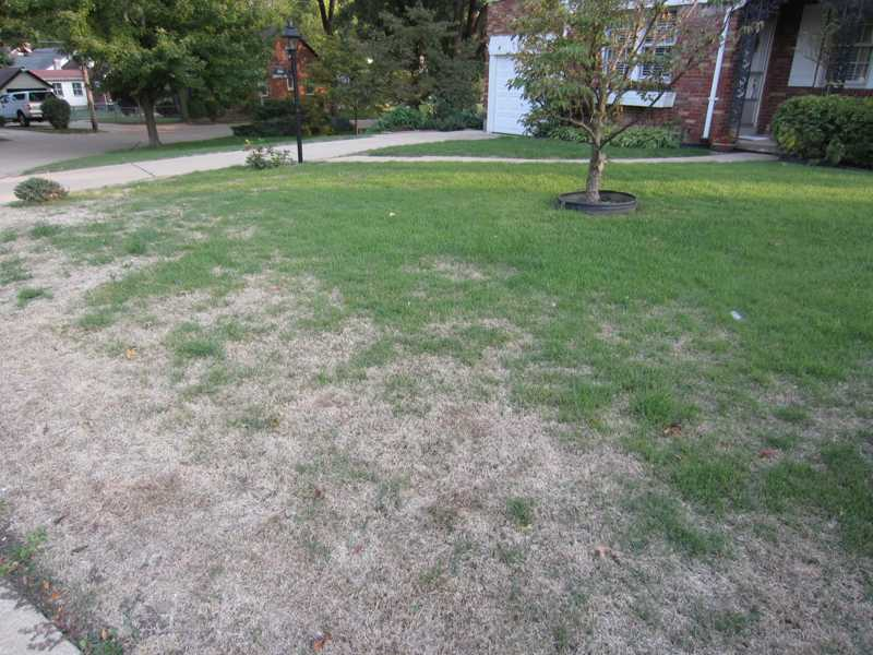 Lawn Problems Zoysia Grass