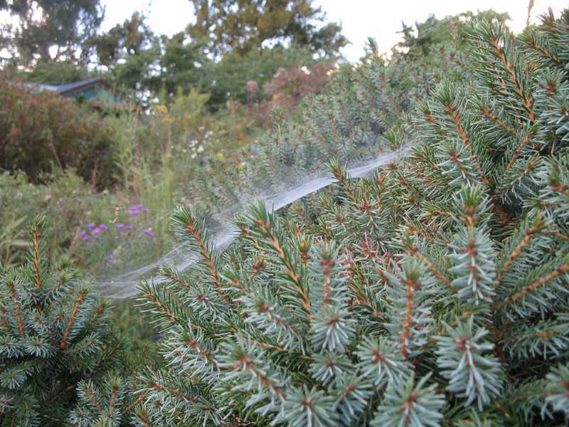 how to use avid for spider mites