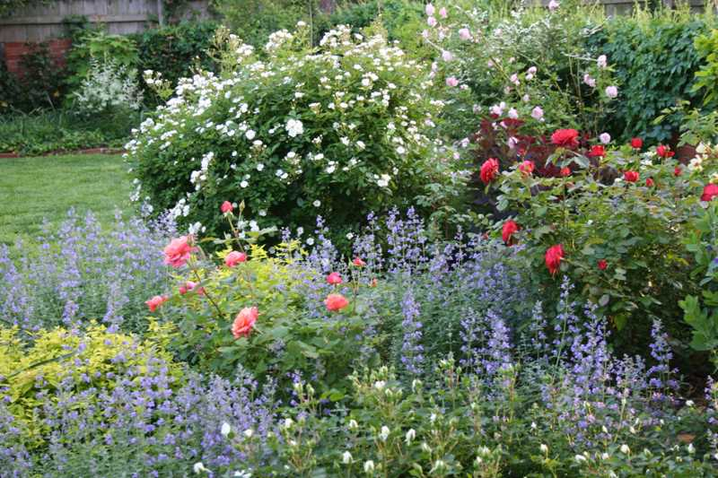 Plants in combination for Gertrude jekyll garden designs