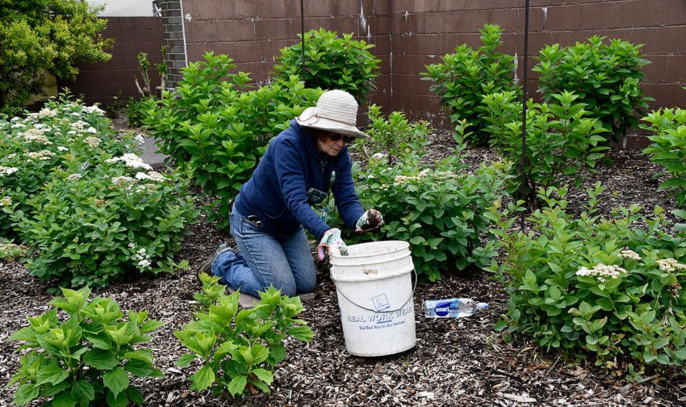 woman kneeling in garden, planting