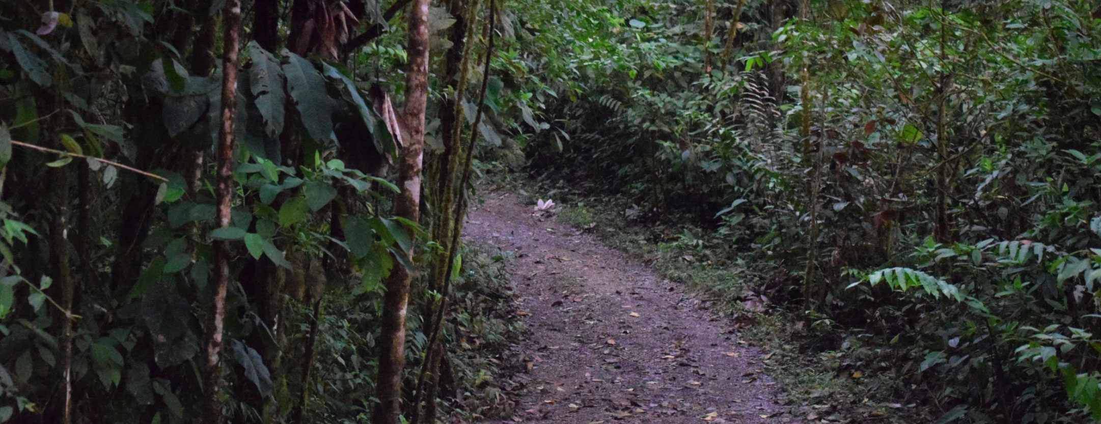 path through rainforest